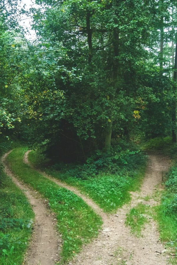 Paths in the Woods
