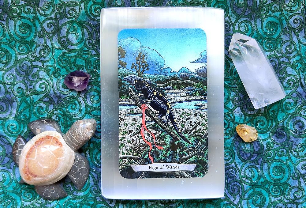 Page of Wands Salamander card from Animal Totem Tarot.